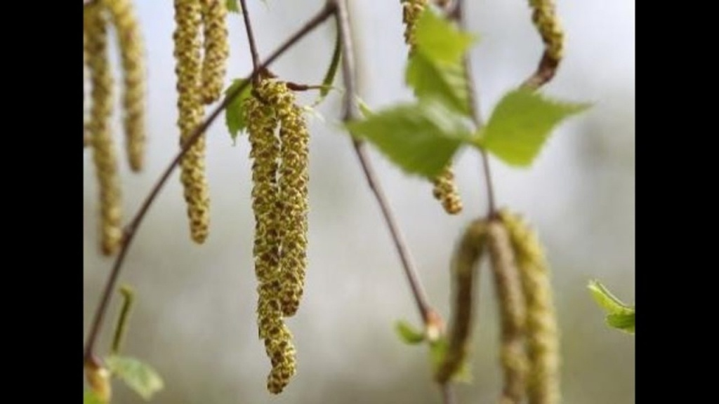 Allergy Sufferers Deal With High Levels Of Pollen In Central Florida - Florida Pollen Map