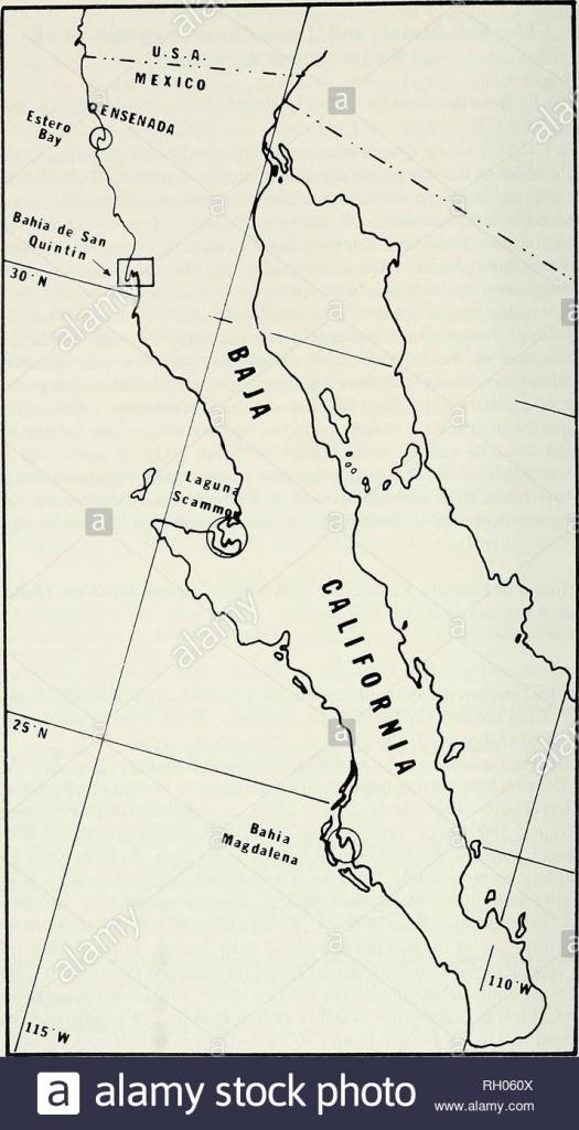 Bulletin. Science; Natural History; Natural History. 164 Southern - San Quintin Baja California Map