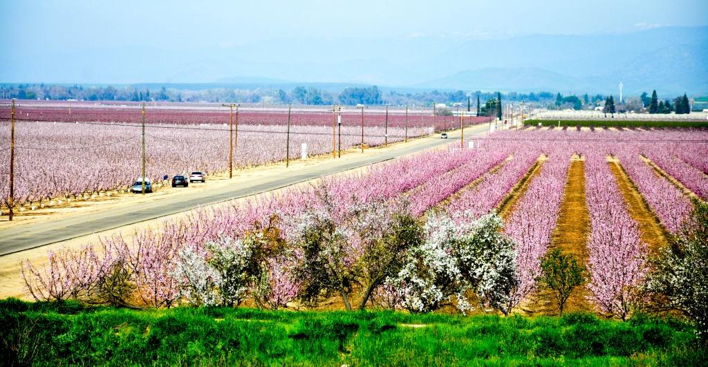 California Blossom Trail   California Grown - California Almond Farms Map
