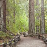 California Redwood Forests: Where To See The Big Trees   Redwood Forest California Map