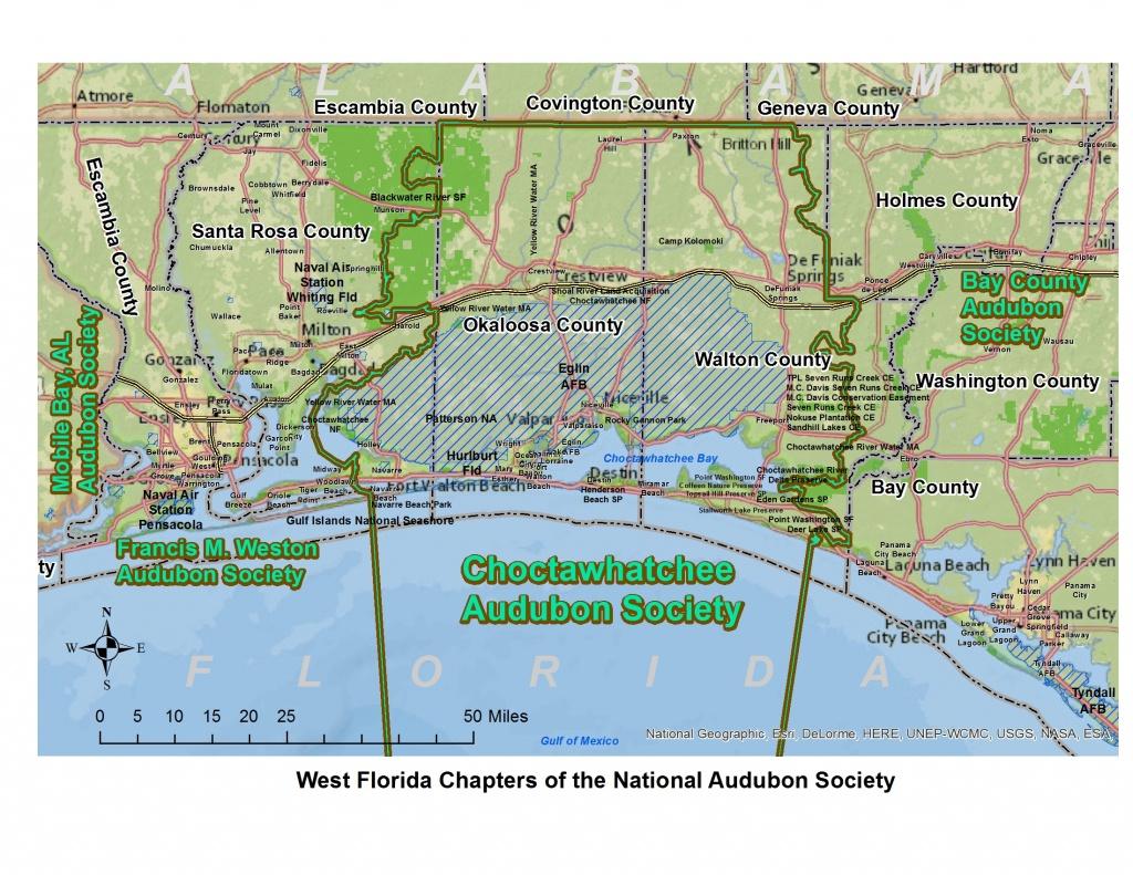 Choctawhatchee Audubon Society | Bird Hub - Great Florida Birding Trail Map
