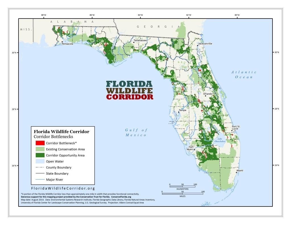 Florida Wildlife - Panthers & Black Bears | Sierra Club - Bears In Florida Map