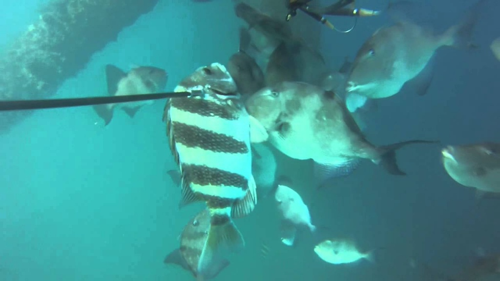 Gopro Spear Fishing. Port O'conner Texas. Oil Rig - Youtube - Texas Oil Rig Fishing Map