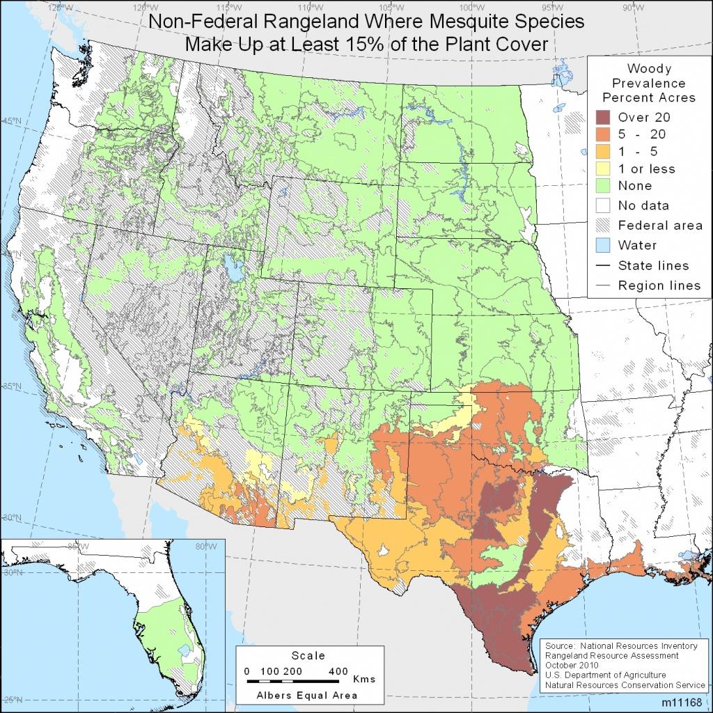 Native Invasive Woody Species | Nrcs - Texas Tree Map