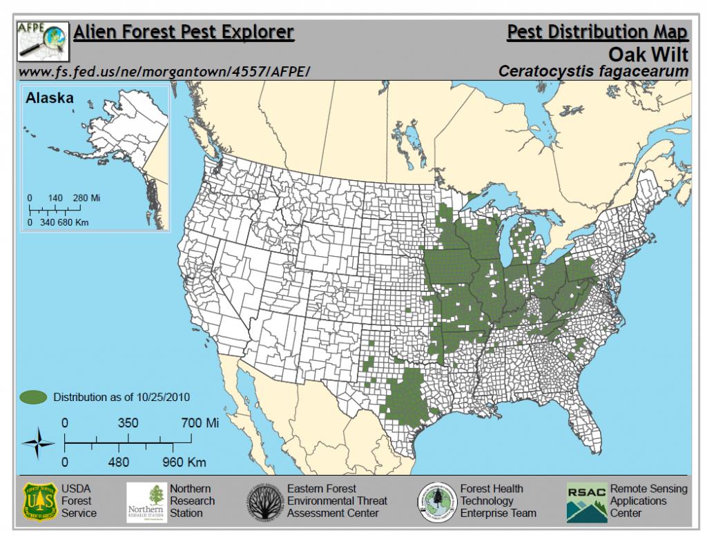 Oak Wilt   Wizard Landscaping And Tree Trimming - Oak Wilt Texas Map
