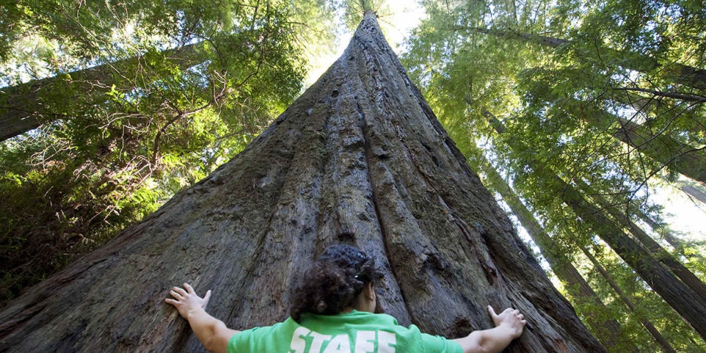 Places To See Big Trees   Visit California - Giant Redwood Trees California Map