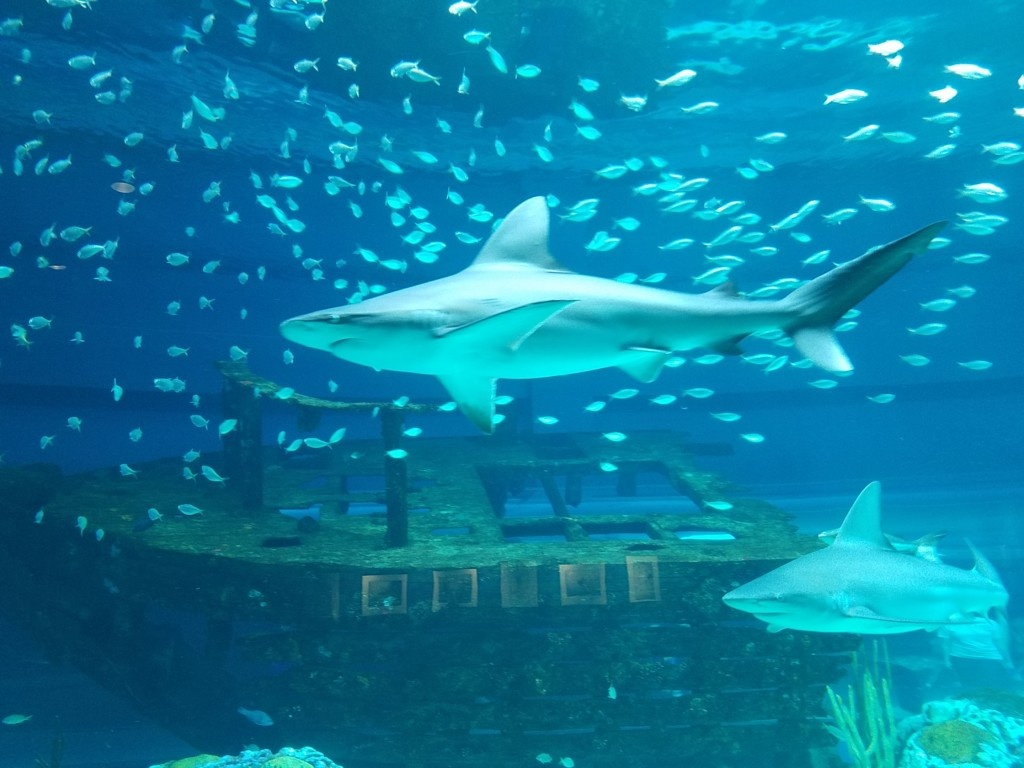 See Youthe Sea: A Guide To The Texas State Aquarium - Texas State Aquarium Map