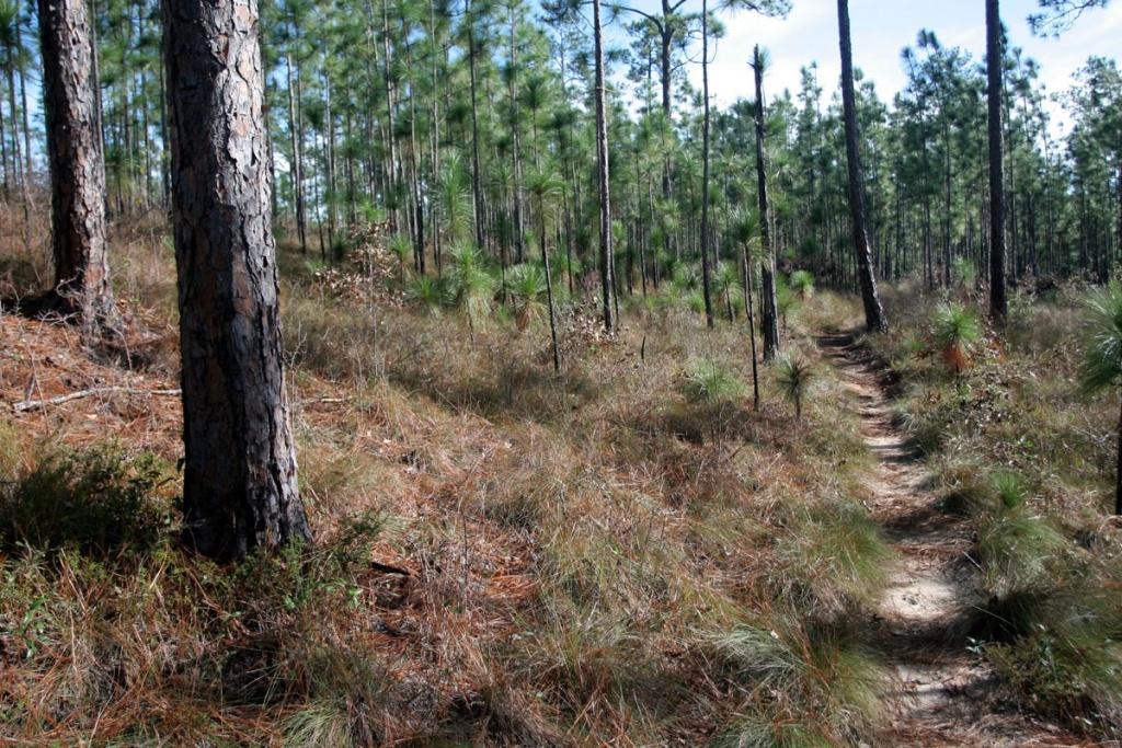 Top 10 Hiking Trails In Florida | Visit Florida - Florida Hiking Trails Map