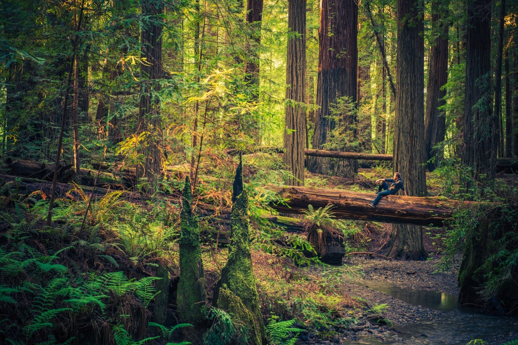 Travel Info For The Redwood Forests Of California, Eureka And - Redwood Forest California Map