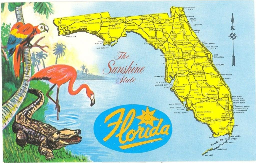 Vintage Florida Postcard - Detailed Map Sunshine State Parrot - Vintage Florida Maps For Sale