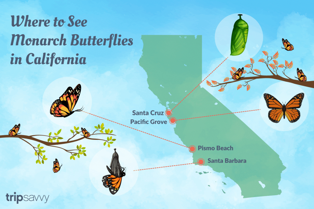 Where To See The Monarch Butterflies In California - Monarch Butterfly Migration Map California